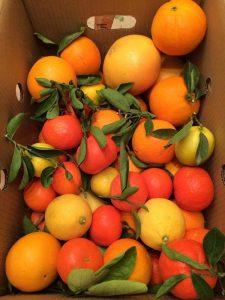 Hojas de limón, mandarina y naranja